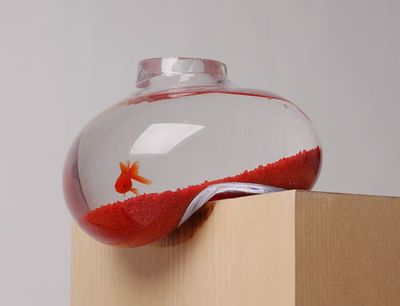 Bubble-fish-tank-1